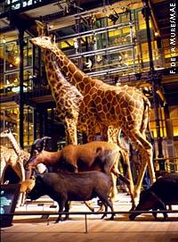 Галерея эволюции природного мира в Музее естественной истории в Париже
