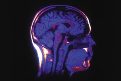 Путешествие в человеческий мозг