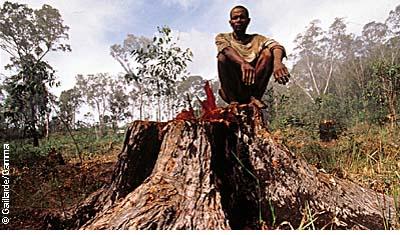 Экономическая система, разрушающая окружающую среду, разрушает сама себя